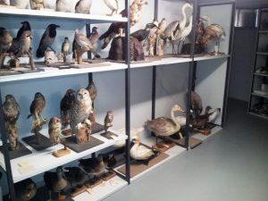Deel vogelcollectie